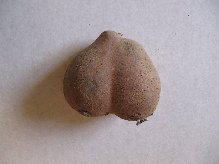 Мужские яйца в картинках 1 фотография