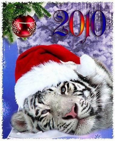 новый тигр 10 (381x468, 51Kb)