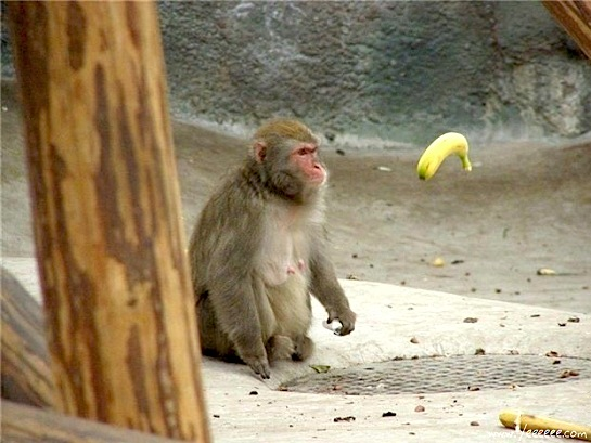 обезьяна и банан