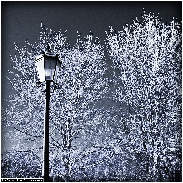 Winter Wood Effect [IR]