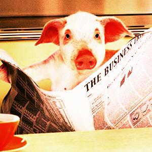 Свинья. Ищу работу