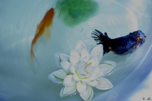 Красота водных глубин