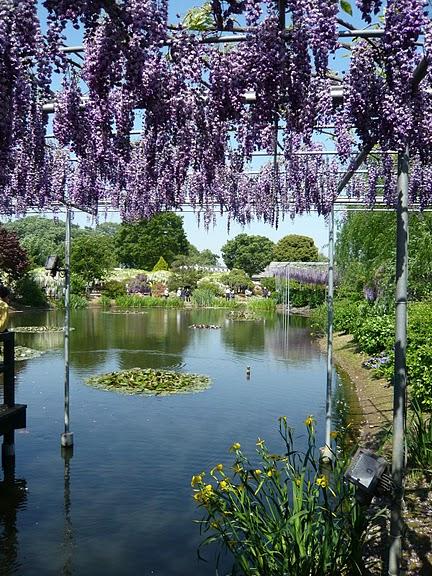 Японский Парк цветов Асикага (Ashikaga Flower Park) -2 94672