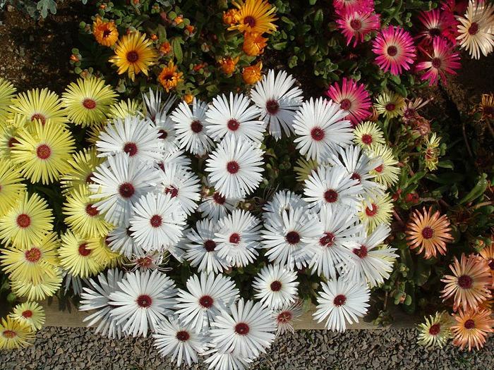 Японский Парк цветов Асикага (Ashikaga Flower Park) -2 78621