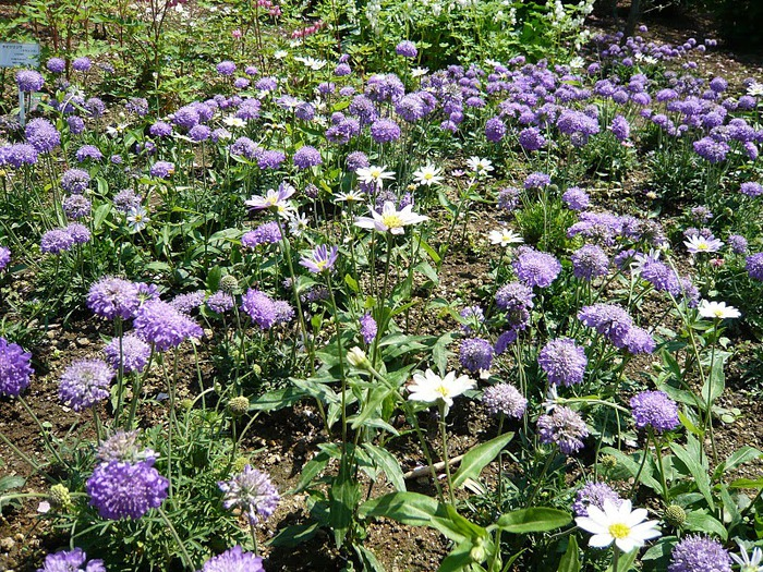 Японский Парк цветов Асикага (Ashikaga Flower Park) -2 61389