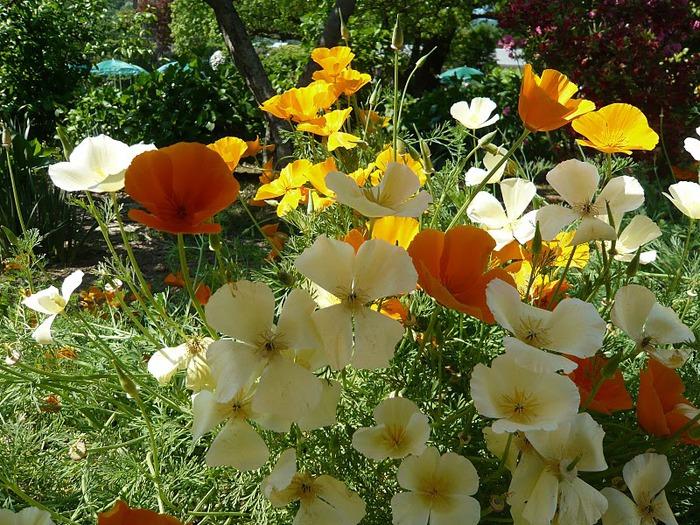 Японский Парк цветов Асикага (Ashikaga Flower Park) -2 13631