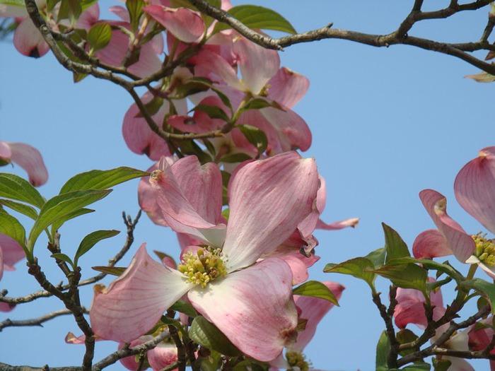 Японский Парк цветов Асикага (Ashikaga Flower Park) -2 62568