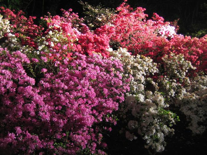 Японский Парк цветов Асикага (Ashikaga Flower Park) -2 43091