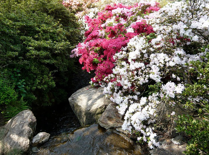 Японский Парк цветов Асикага (Ashikaga Flower Park) -2 45171