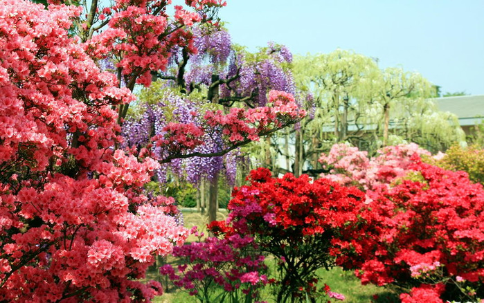 Японский Парк цветов Асикага (Ashikaga Flower Park) -2 41403