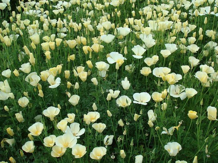 Японский Парк цветов Асикага (Ashikaga Flower Park) -2 49805