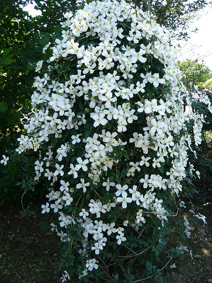 Японский Парк цветов Асикага (Ashikaga Flower Park) -2 34319