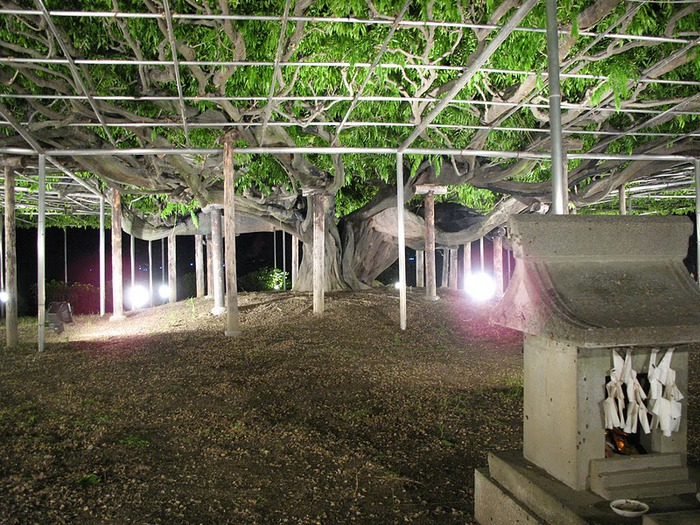 Японский Парк цветов Асикага (Ashikaga Flower Park) -2 70245