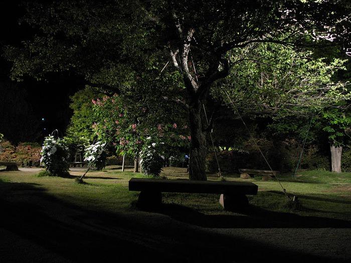Японский Парк цветов Асикага (Ashikaga Flower Park) -2 58521
