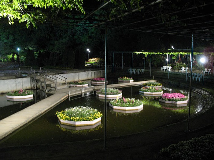 Японский Парк цветов Асикага (Ashikaga Flower Park) -2 87968
