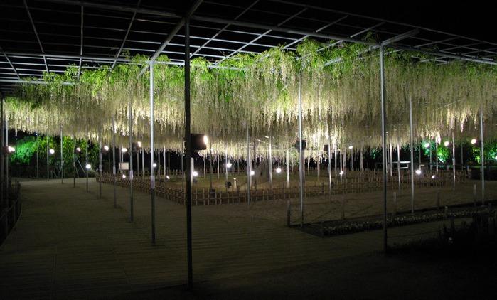 Японский Парк цветов Асикага (Ashikaga Flower Park) -2 67830