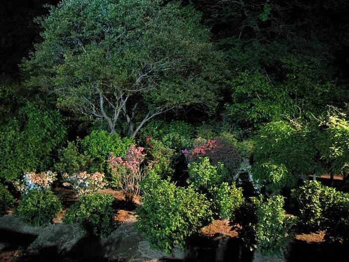 Японский Парк цветов Асикага (Ashikaga Flower Park) -2 35230