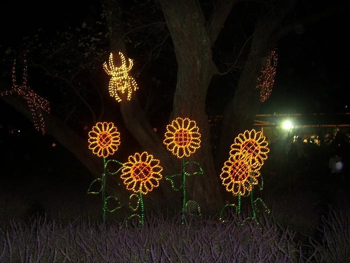 Японский Парк цветов Асикага (Ashikaga Flower Park) -2 53393