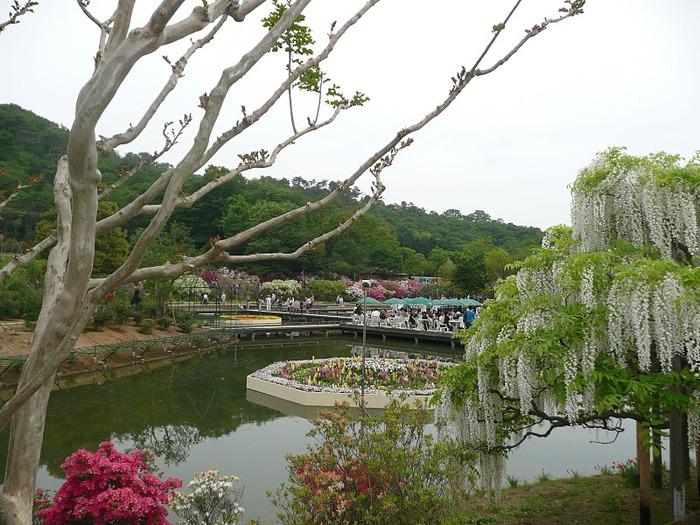 Японский Парк цветов Асикага (Ashikaga Flower Park) -2 93332