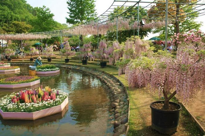 Японский Парк цветов Асикага (Ashikaga Flower Park) -2 81111