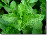11-mint-leaves