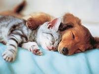 Кошка с собакой видят чудесные сны