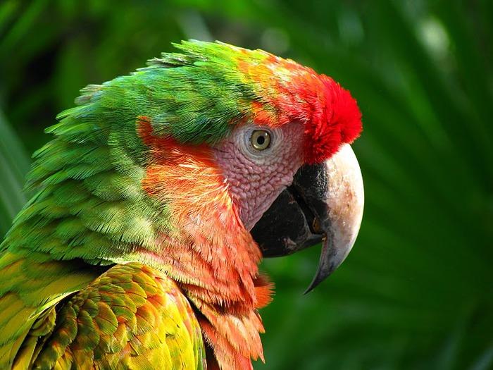 Парк Xel-Ha в Мексике 46705