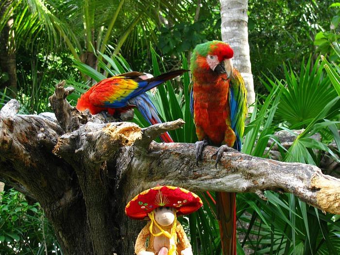 Парк Xel-Ha в Мексике 31112
