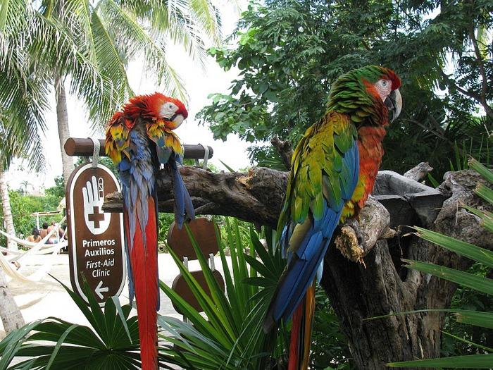 Парк Xel-Ha в Мексике 37305