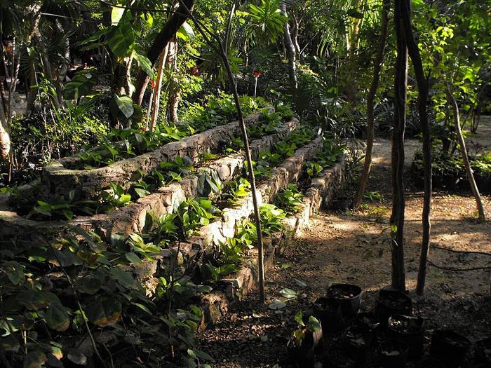Парк Xel-Ha в Мексике 15806