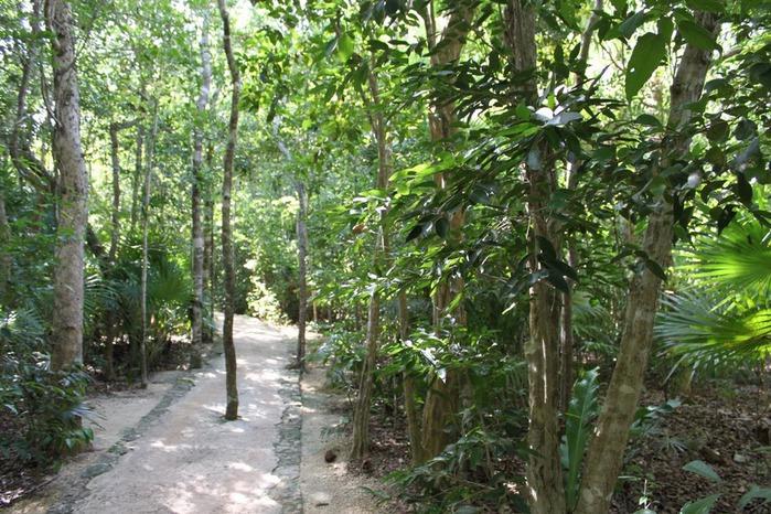 Парк Xel-Ha в Мексике 60447