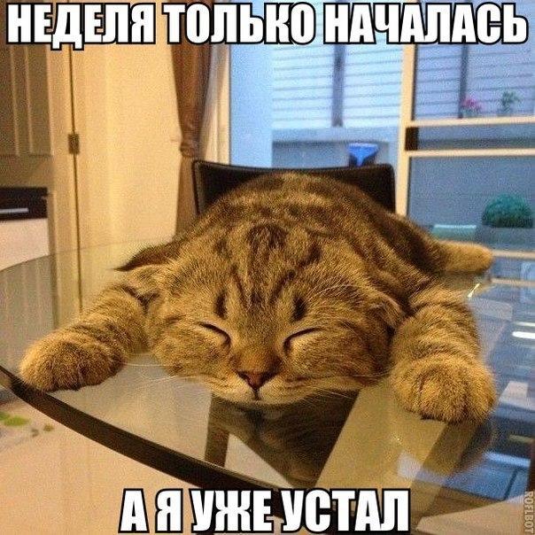 кот (604x604, 366Kb)