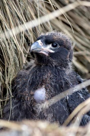 Детёныши животных на Фолклендских островах