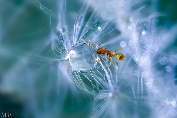 macro-photography-miki-asai-3 (700x467, 35Kb)