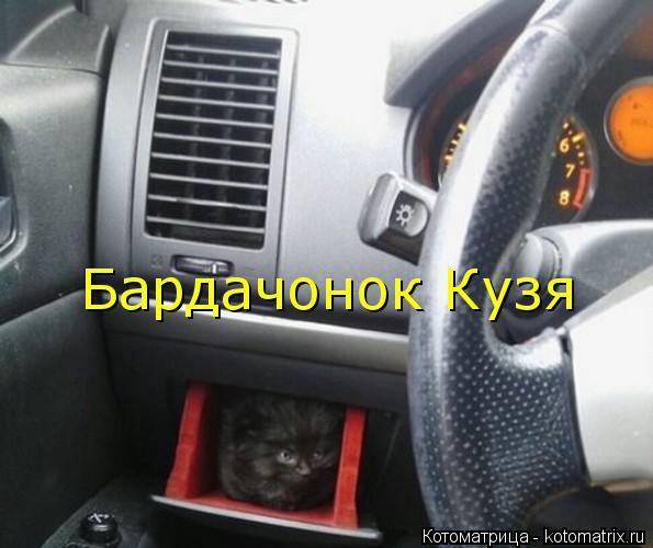 kotomatritsa_- (595x500, 96Kb)