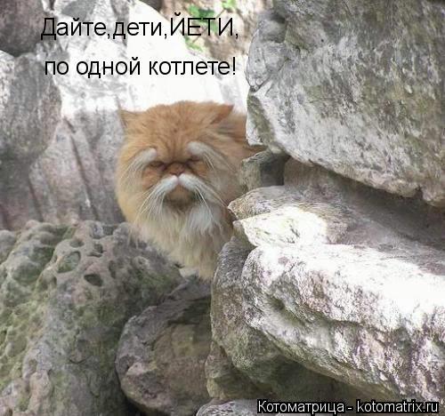 kotomatritsa_pR (500x468, 125Kb)