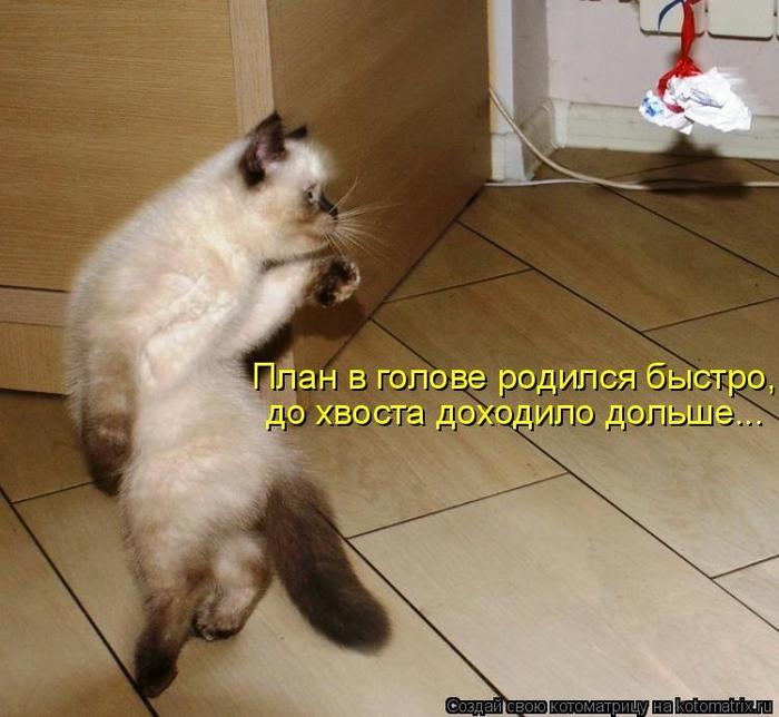 kotomatritsa_uD (700x644, 268Kb)