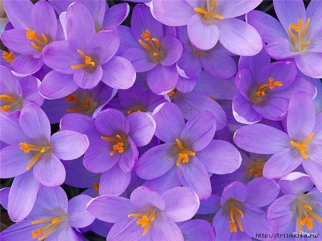 Я нарву вам цветов к именинам! Поздравляю всех именинников апреля!