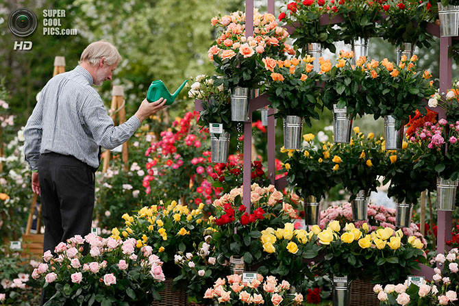 фестиваль цветов в лондоне фото 1 (670x447, 504Kb)