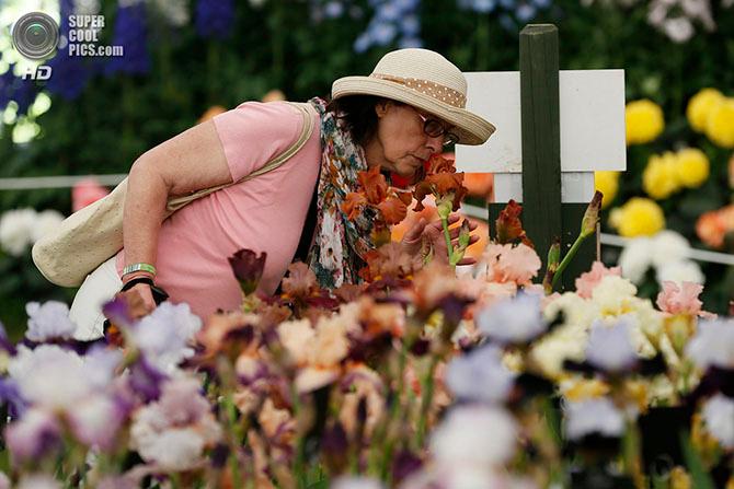 фестиваль цветов в лондоне фото 4 (670x447, 310Kb)