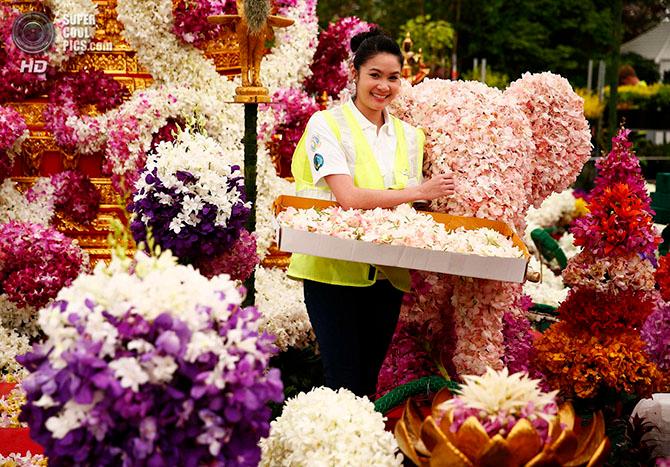 фестиваль цветов в лондоне фото 7 (670x467, 549Kb)