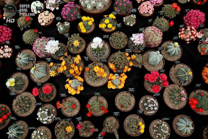 фестиваль цветов в лондоне фото 22 (670x447, 496Kb)