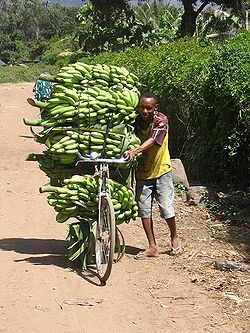 250px-Bananen_tanzania (250x333, 36Kb)