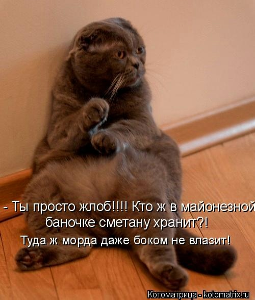 kotomatritsa__J (500x587, 109Kb)