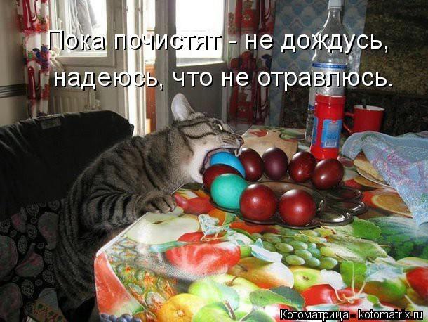 kotomatritsa_AR (610x458, 161Kb)