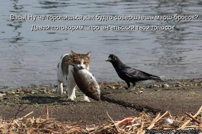 kotomatritsa_En (700x465, 242Kb)