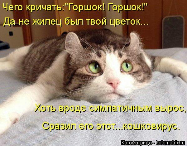 kotomatritsa_kj (600x468, 173Kb)