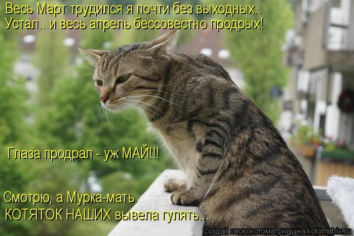 kotomatritsa_Mk (700x466, 246Kb)