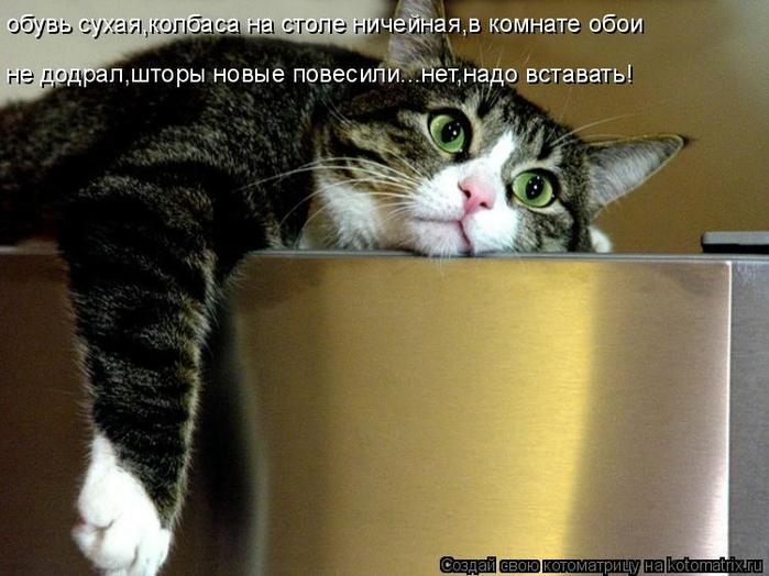 kotomatritsa_pn (700x524, 243Kb)