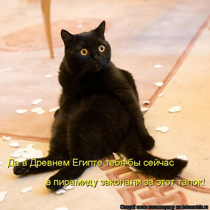 kotomatritsa_T (700x700, 258Kb)